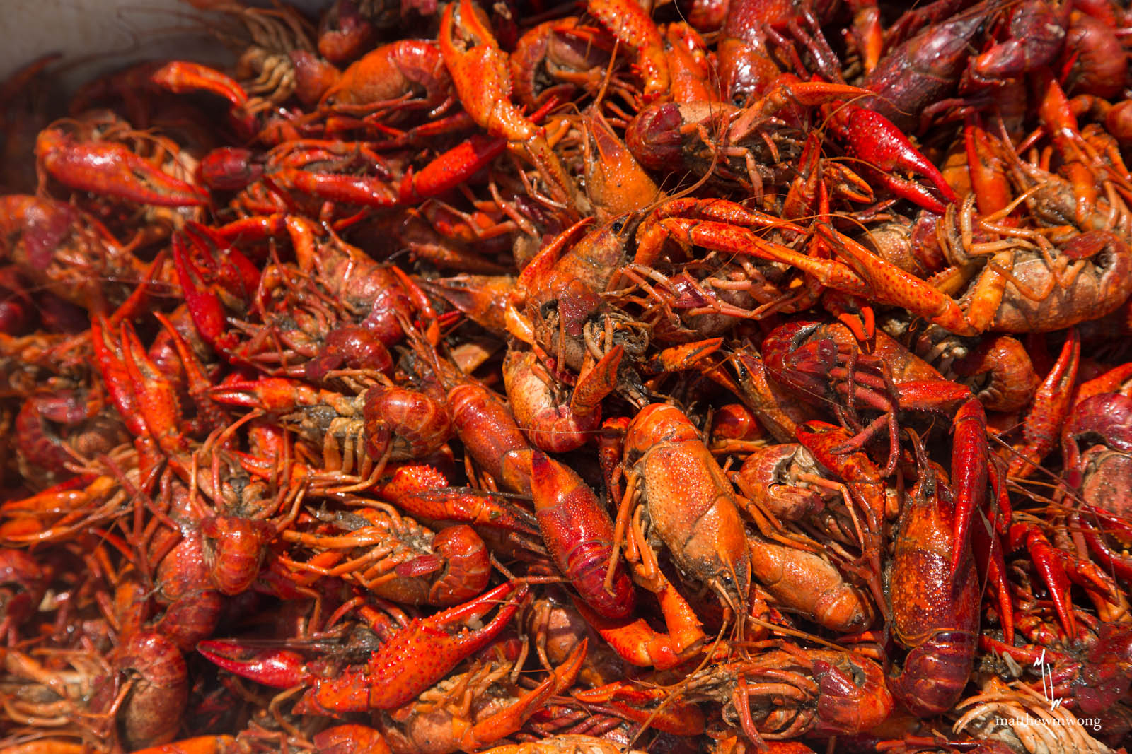 how to travel with live crawfish